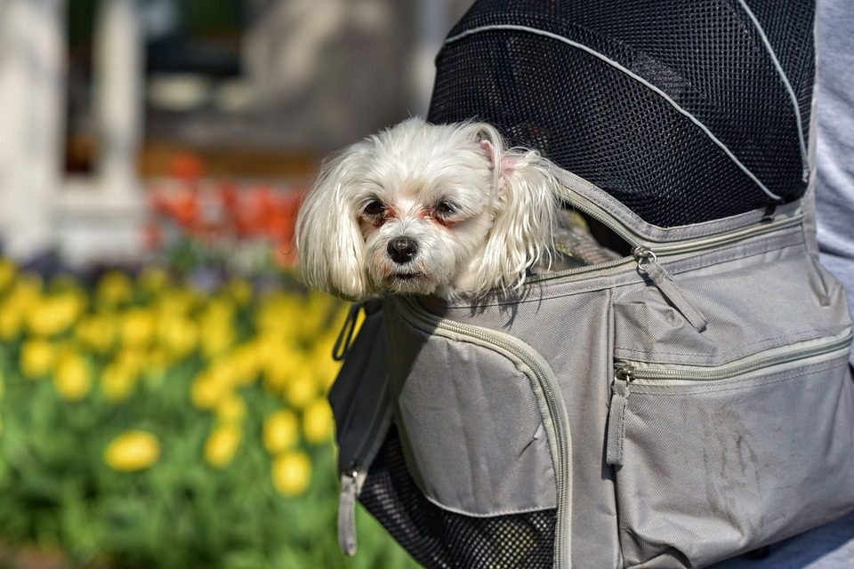 Best Small Dog Backpacks - Post Thumbnail